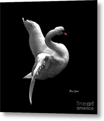 Majestic Swan 2 Metal Print by Dale   Ford