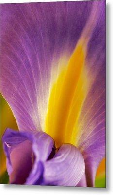 Photograph Of A Dutch Iris Metal Print by Perla Copernik