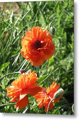 Metal Print featuring the photograph Poppy by Rebecca Overton