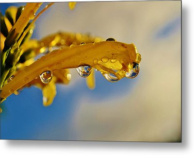 Metal Print featuring the photograph Raindrops On Blossom by Werner Lehmann