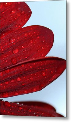 Raindrops On Red Flower Metal Print