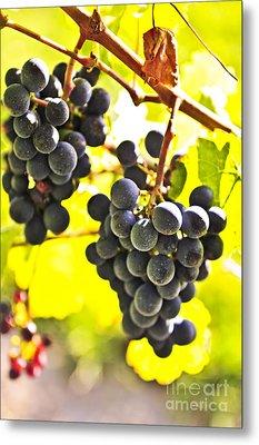 Red Grapes Metal Print by Elena Elisseeva