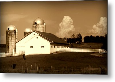 Cattle Farm Mornings Metal Print