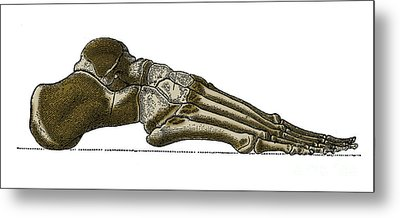 Right Foot Metal Print by Science Source