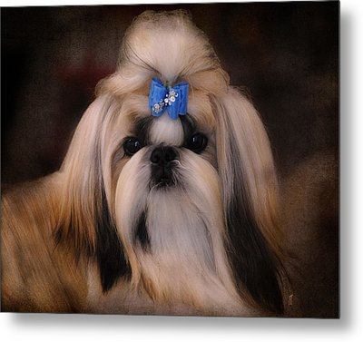 Shih Tzu Metal Print by Jai Johnson