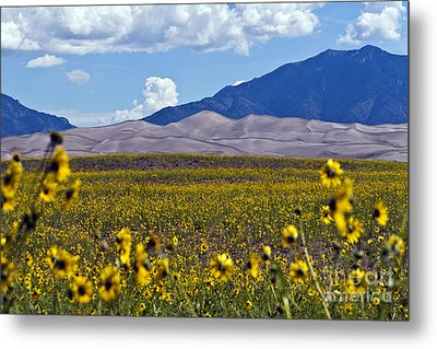 Sunflowers Sand N Sky Metal Print by Scotts Scapes