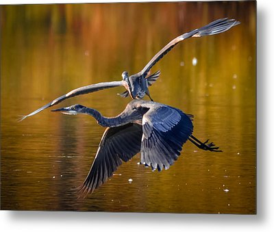 The Chase Metal Print by Brian Stevens