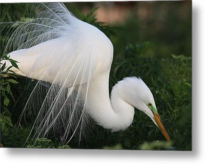 White Egret Metal Print by Jeanne Andrews