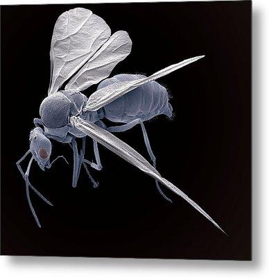 Winged Ant, Sem Metal Print by Steve Gschmeissner