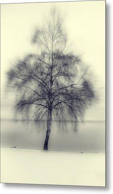 Winter Tree Metal Print by Joana Kruse