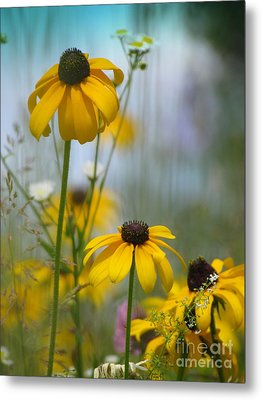 Metal Print featuring the photograph Wildflowers by France Laliberte