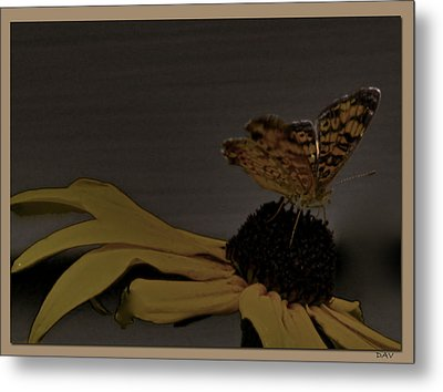Butterfly Collection Metal Print by Debra     Vatalaro