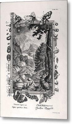 1731 Johann Scheuchzer Creation 5th Day Metal Print by Paul D Stewart