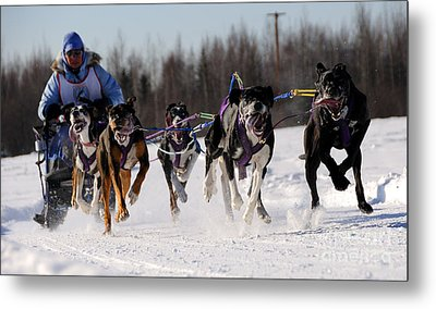 2011 Limited North American Sled Dog Race Metal Print by Gary Whitton