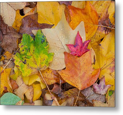 Autumn Leaves Metal Print by Hans Engbers