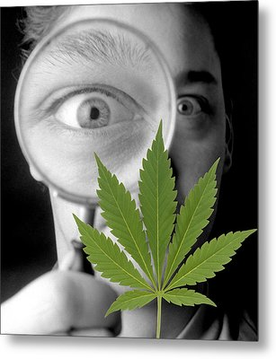 Cannabis Research Metal Print by Victor De Schwanberg