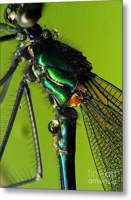Dragonfly In Drops Metal Print by Odon Czintos