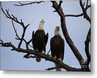 Eagles Metal Print by Jeanne Andrews