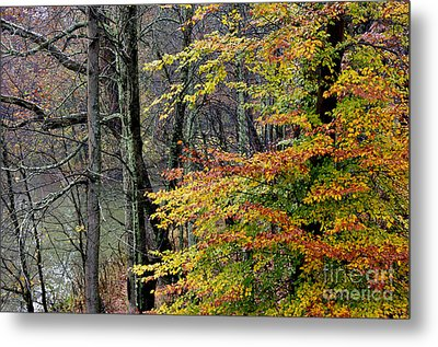 Fall Along West Fork River Metal Print by Thomas R Fletcher