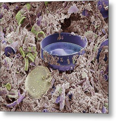 Fossilised Diatoms, Sem Metal Print by Steve Gschmeissner