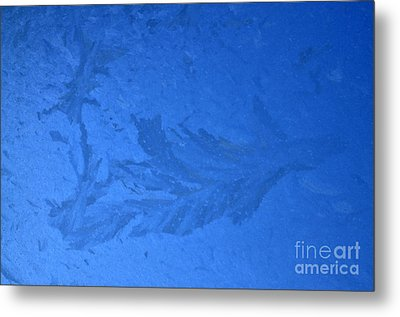 Frost On A Windowpane Metal Print by Thomas R Fletcher