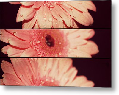 Gerber Daisy Metal Print by Cathie Tyler