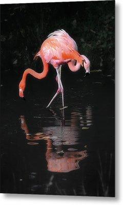 Pink Flamingos Metal Print by Naman Imagery