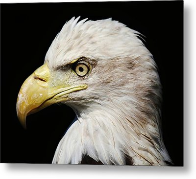Proud Metal Print by Paulette Thomas