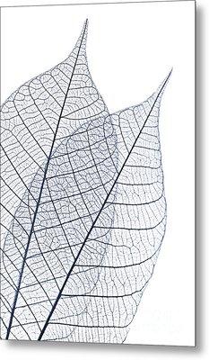 Skeleton Leaves Metal Print