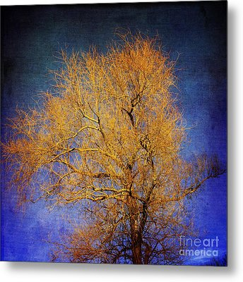 Textured Tree Metal Print by Bernard Jaubert