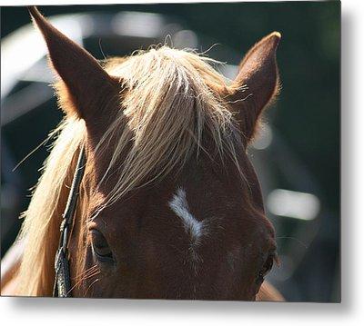 The Beauty Of The Horses Metal Print by Valia Bradshaw