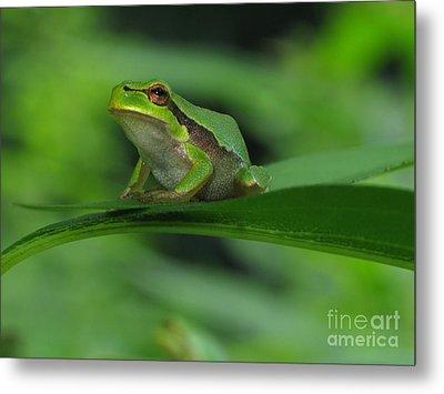 Tree Frog Metal Print by Odon Czintos