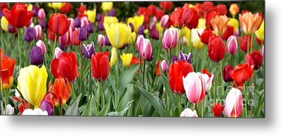 Tulip Garden University Of Pittsburgh  Metal Print by Thomas R Fletcher