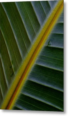 Metal Print featuring the photograph Wild Banana Leaf by Werner Lehmann