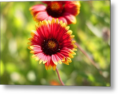 Metal Print featuring the photograph Wild Flower by Jeanne Andrews