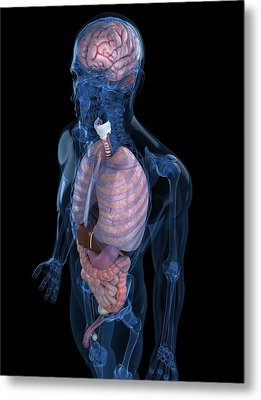 Male Anatomy, Artwork Metal Print by Sciepro