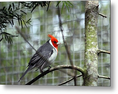 Bird Metal Print by Jeanne Andrews
