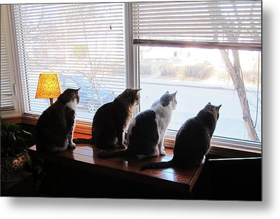 4 Cats Spot Bird Through Window Metal Print by Andy Hodgson