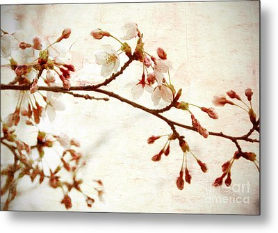 Cherry Blossoms Metal Print by Charline Xia