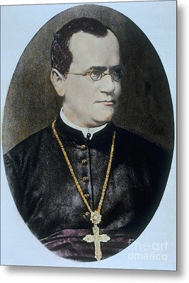 Gregor Mendel, Father Of Genetics Metal Print by Science Source