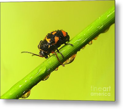 Insect Metal Print by Odon Czintos