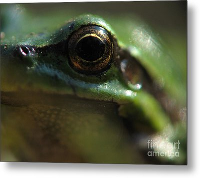 Look Metal Print by Odon Czintos