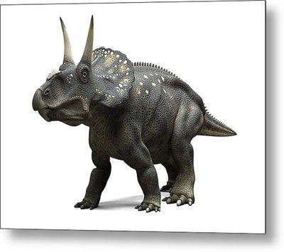 Nedoceratops Dinosaur, Artwork Metal Print by Sciepro