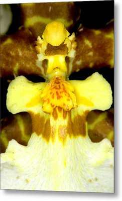 Orchid Flowers Of C Ribet Metal Print by C Ribet