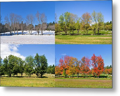 4 Season Trees Metal Print
