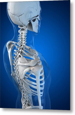 Upper Body Bones, Artwork Metal Print by Sciepro