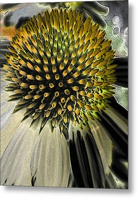 Coneflower Metal Print
