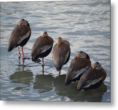 5 Bars Metal Print by Maggy Marsh