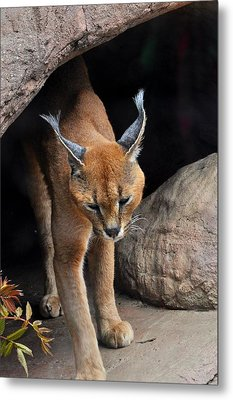 Mix Selection Of Animals  Metal Print by Puzzles Shum
