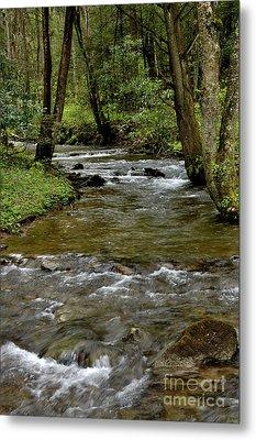 Monongahela National Forest Metal Print by Thomas R Fletcher